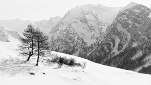 2 Larches by rdalpes