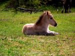 Baby horse by Bouwland