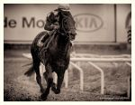 A Day At The Races -Black by AndersStangl
