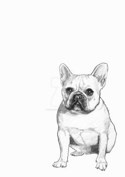 French Bulldog by kwoloszynek