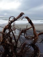 driftwood by redtrain66