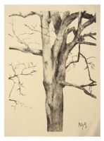 Portrait of a Tree by barbitone