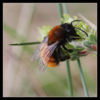 Bombus by Globaludodesign