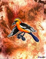 Oriole by dreamastermind