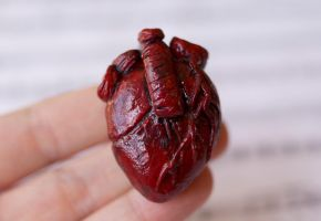 Anatomical Heart Magnet by ChloeeeeLynnee97
