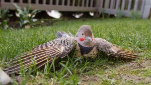 Chilling Flicker by DISC-Photography