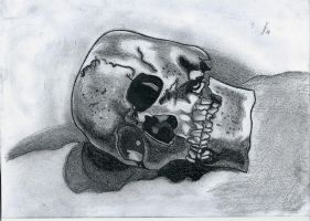 Skull drawing by flaviudraghis