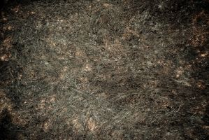 Burned Grass Texture [FREE] by swoodee