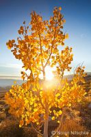 Aspen Sun by narmansk8