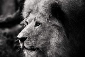 The King by Robsonbillponte666