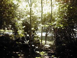 Paths by Lafia-Stock