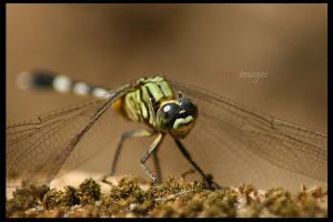 dragonfly by jamesF601