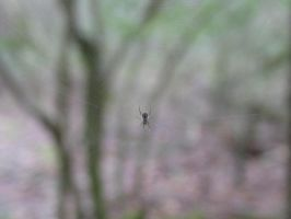 the itsy bitsy spider... by dproberts