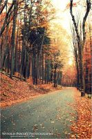 Follow The Golden Path by pociej