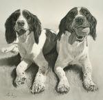 Commission - 2 Springers 'Ralph' and 'Ruby' by Captured-In-Pencil