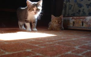 curious kittens by jimmyselix