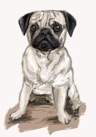 Puggy by DLouiseART