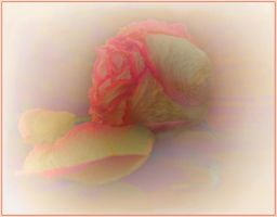 Spirit of the rose by mirator