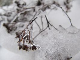 plant in ice 3. by Barusa