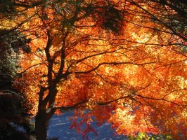 Fire Tree by browneyedanachronism
