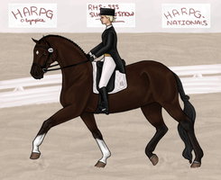 Vino: Beginner Dressage by xXMesmerizedXx