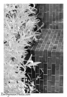 IR Abstraction of Wall by Earthymoon