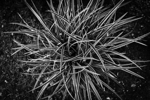 Darker Black and White Grass by EaGle1337