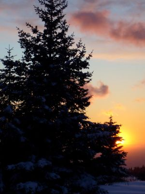 A sunset and spruce
