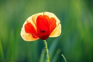 natural beauties in the right light by MT-Photografien