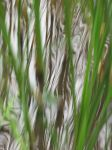 Water And Grass 4 by FiLH