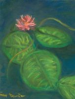 water lilies by samtrevino0