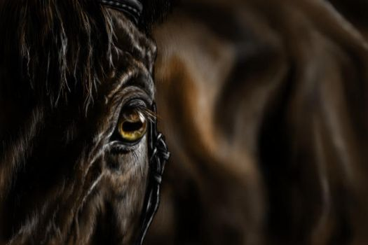 Horse detail by dieLille