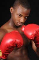 Young Boxer by cable9tuba