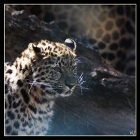 Leopard 9 by Globaludodesign