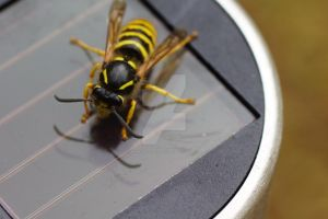 wasp 3 by Hyperborean1987