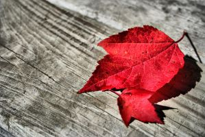 Leaves HDR by entropy462