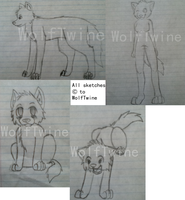 Wolf Sketches - Choose the sketch you'd use by WolfTwine