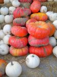 Pumpkins 3 stock by thiselectricheart