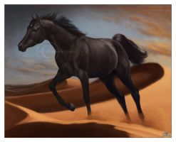 Shah Barak - Egyptian stallion by south-wind