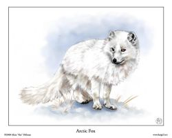 Arctic Fox by KatGirlStudio