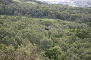 Bird at brimham rocks by Distorted-Colours