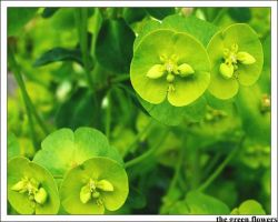 The Green Flowers by dolly-decay