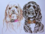 Cocker Spaniels - Commission by everythingerika