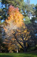 Park Trees Stock 1 by CNStock