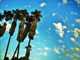 Palms in the sky by VirginiaRoundy