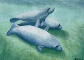 Manatees in Watercolor by tursiart