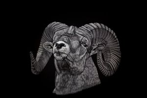 Bighorn Sheep by Lara-Shychoski