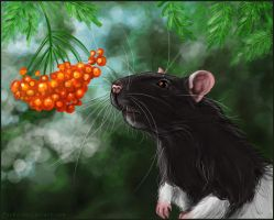 Rowanberry and rat by FoxDJ