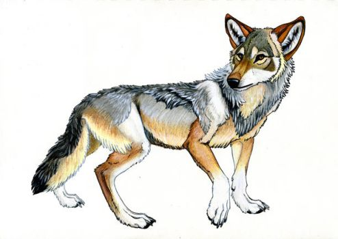 Ahts, Preview in colored pencil and ink. by Werewolfschreie