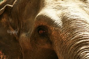 Zoo 14 by halogenlampe